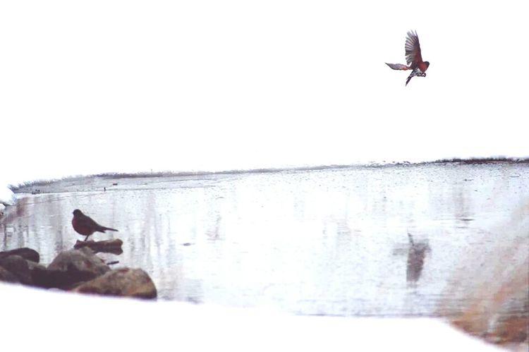 Bird in flight. Birdwatching Reflection Nature AmberMariePhotography #AMP #TheAmberMarie #Pond #PhotographyLife