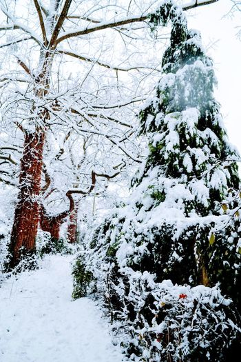 First snow of the season Christmas Is Coming To Town #London#♥ #AscotsLane #England Snow Winter Weather Nature Tree Beauty In Nature