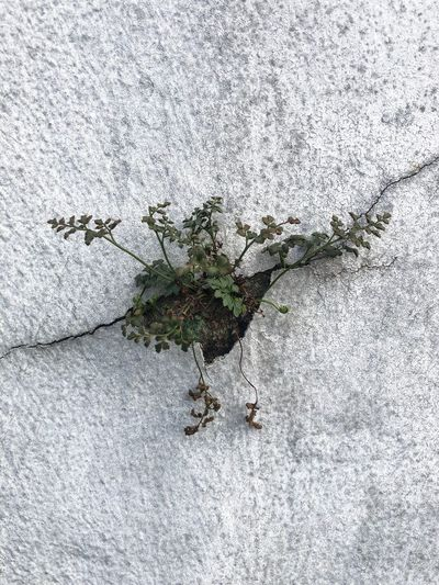 Close-up of flowers on concrete wall