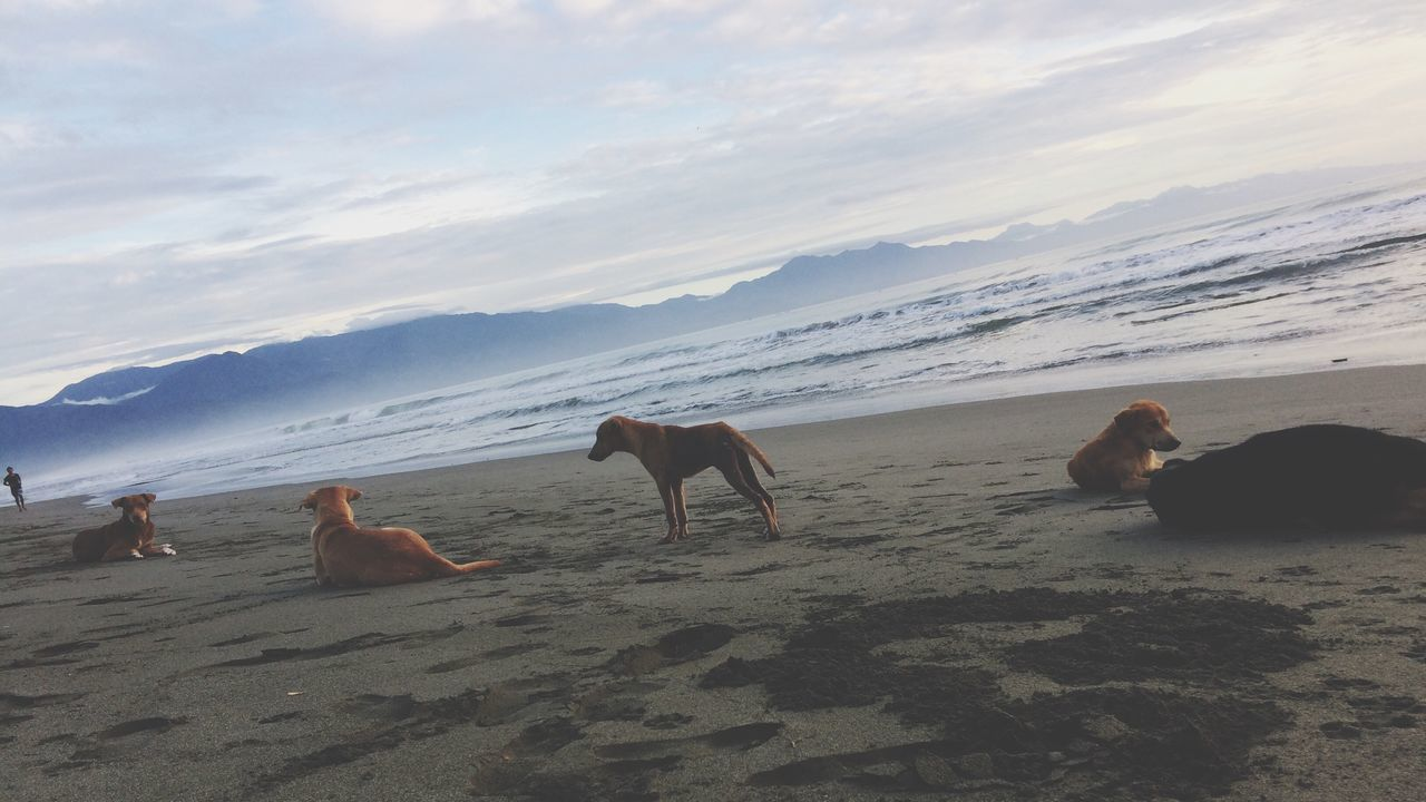 Beach Dogs Beachlife Baler Animals Sand Clouds And Sky Surf