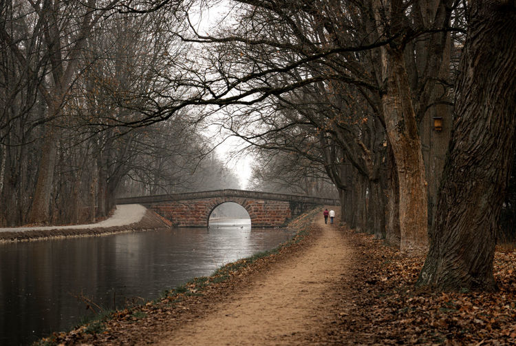 Bridge over river in forest during winter