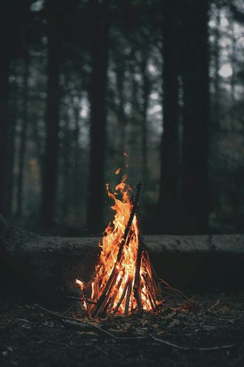 Burning desires Heat - Temperature Forest Burning Flame Tree Nature Outdoors Night No People Close-up Forest Fire First Eyeem Photo