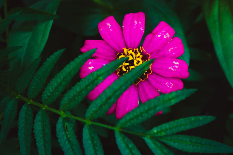 Pink Color Pink Flower Pink Flowers First Eyeem Photo Flower Head Flower Petal Close-up Green Color Plant
