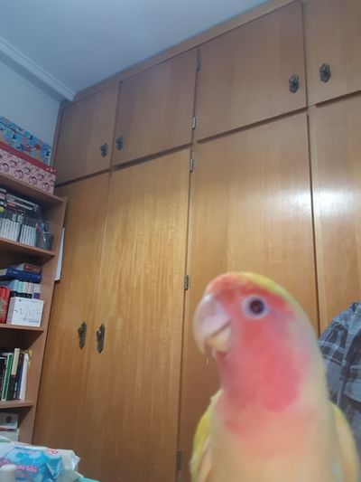 Modern Hospitality Bird Trapped Close-up