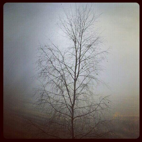 Nature Trees Fog