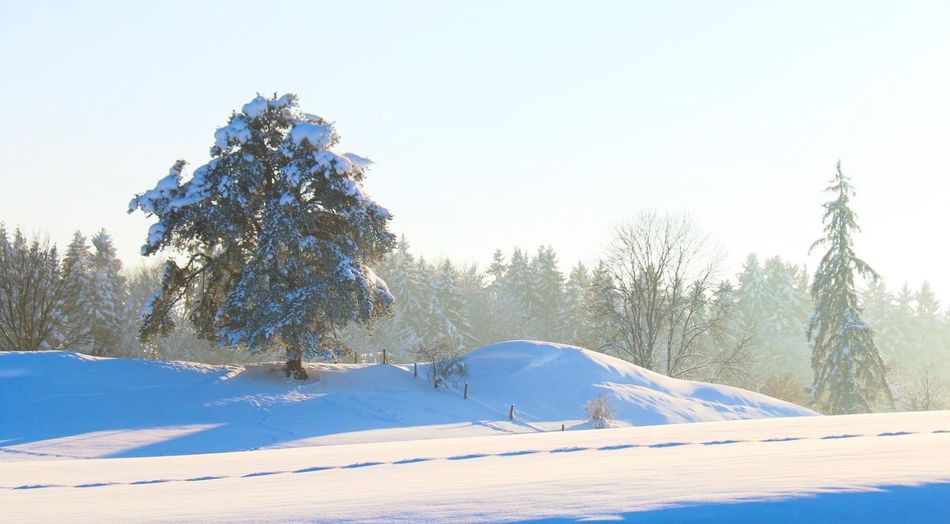 Deutschland Kempten (Allgäu) Snow Wintertime Beat-fighter Winter Landscape Photography Allgäu A winters tale ???