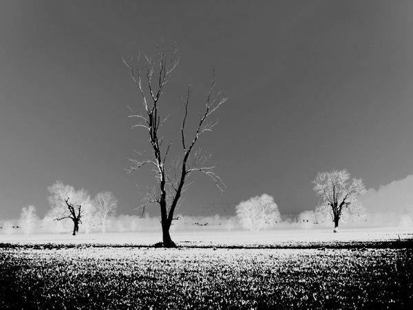 Composition with a lonesome tree Autumn Black And White Experimental Edit Experimental Photography Fine Art Photography Landscape Late Autumn Evening Liechtenstein Lonesome Tree Long Exposure Nature Nature Morte No Leaves Ruggell Ruggeller Riet Single Tree Tranquil Scene Tranquility Tree Tree Without Leaves Tree Without Leaves Autumn