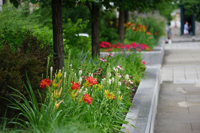 Plant Flower Flowering Plant Freshness Green Color Beauty In Nature Growth Plant Flower Flowering Plant Freshness Green Color Beauty In Nature Growth Nature Red Footpath Fragility Vulnerability  Focus On Foreground Garden Selective Focus Multi Colored Close-up Outdoors