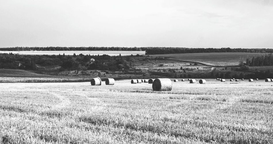 Monochrome Photography Agriculture Rural Scene Horizontal Farm Outdoors Black And White Rick Stack Field Countryside Hay Landscape_Collection Landscape