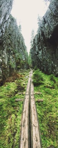 Nature Outdoors Forest No People The Way Forward Swamp Gorge Ice Age Finland Orinoro Wandering Hiking Tranquility Day Hiking Trail Wanderlust First Eyeem Photo