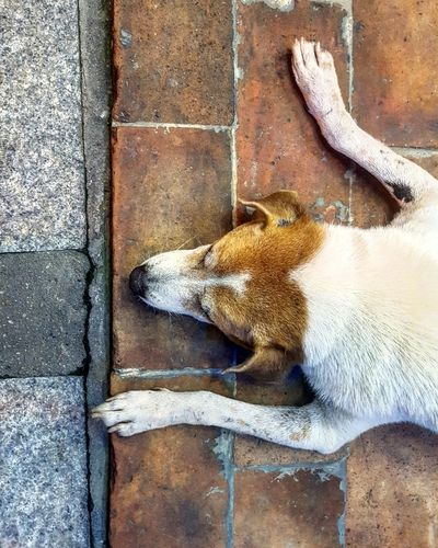 One Animal Pets Animal Themes Mammal Dog Domestic Animals Samsung Galaxy S7 Day No People Low Section Close-up Dogslife Dog Dogs Pavement Pavement Patterns Pavement Textures Samsung S7Footpath Soi Dog Soi Dogs Dogs Of Thailand Sleeping Dog Sleeping Street Dogs