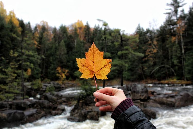 Oh Caaaanadaaaa Autumn Tree Change Outdoors Leaf Nature Maple Leaf Canada Exploring Explore Nature_collection