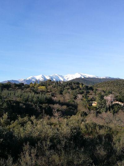Canigou Mountain Mon Pays Ce N'est Pas Un Pays, C'est Un Art De Vivre! Blue Sky Scenics No People Nature Snow Outdoors Beauty In Nature Landscape Mountain Cold Temperature Day