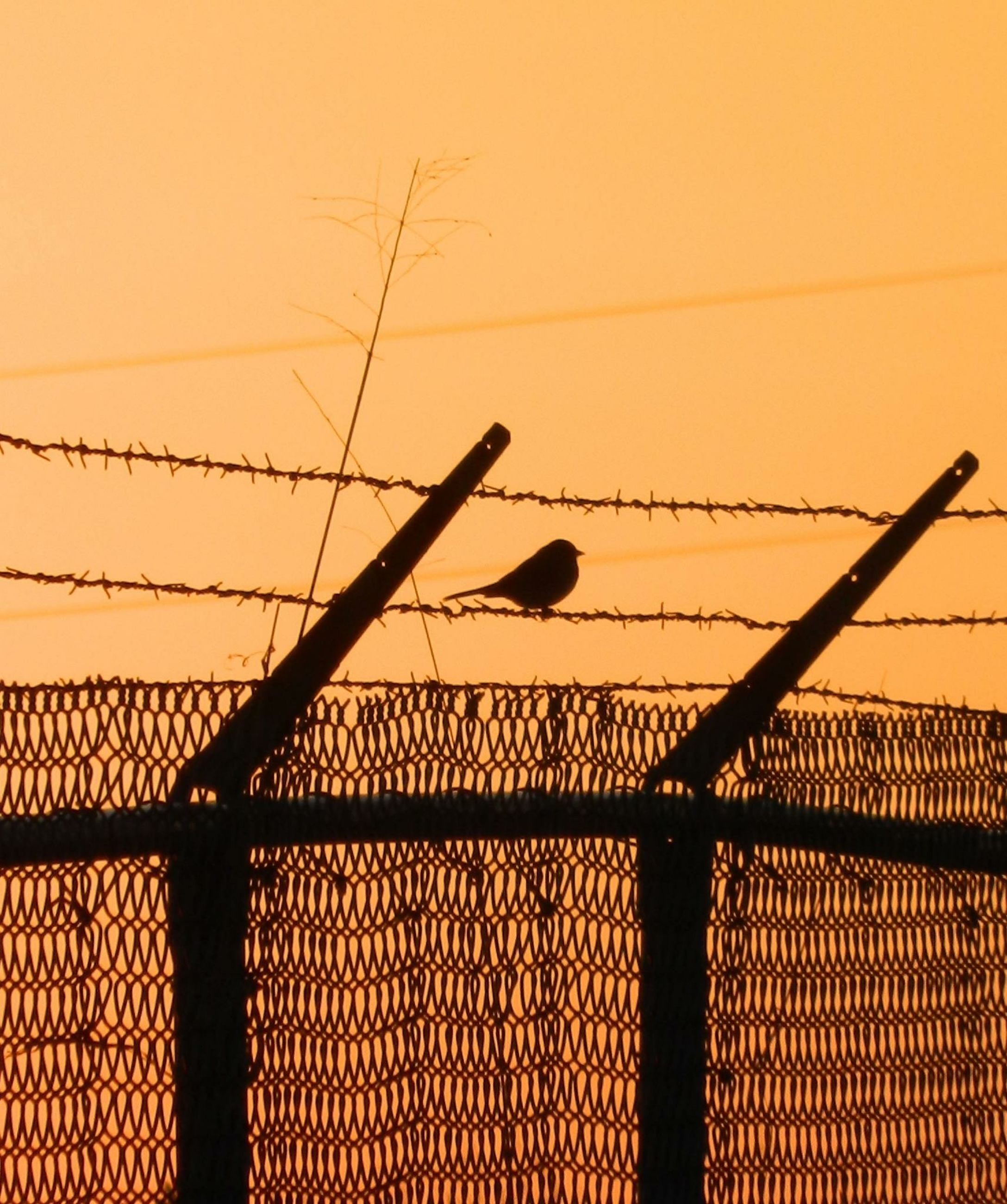 sunset, orange color, fence, protection, safety, metal, barbed wire, silhouette, chainlink fence, security, low angle view, sunlight, pattern, no people, sky, outdoors, nature, connection, built structure, power line