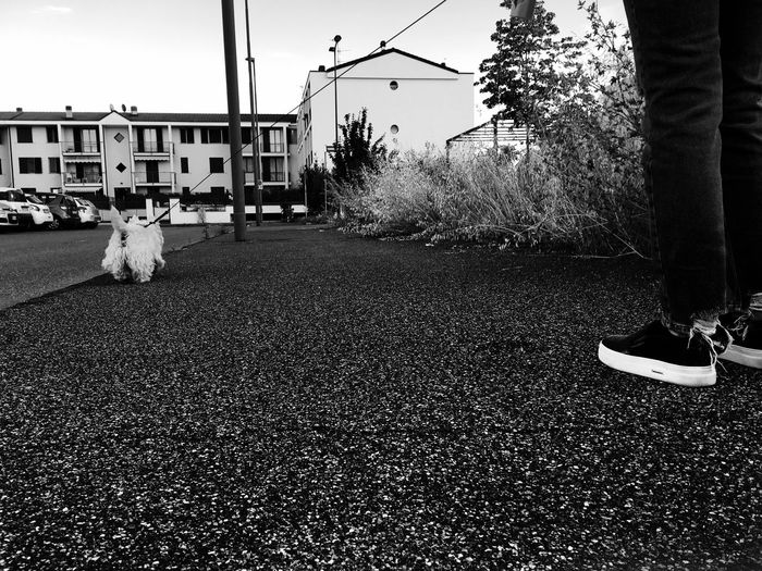 Street Photography Streetphoto_bw Black And White B&w Dog Dog Love West Highland White Terrier Shoes Walking Around Picoftheday Monochrome Photography