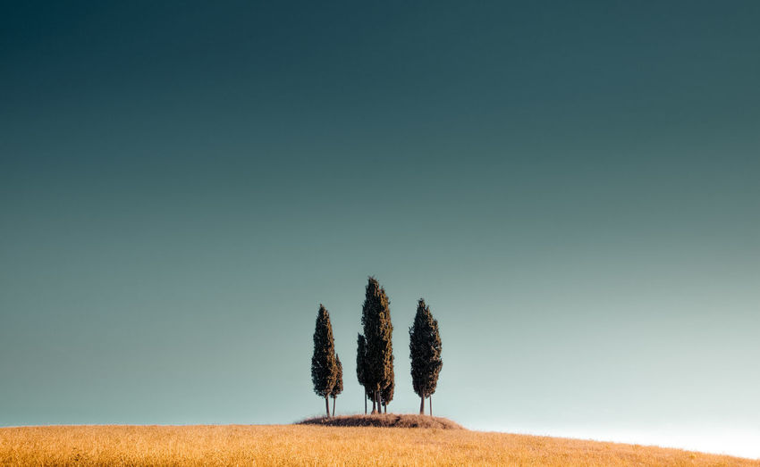 Trees by grass on land against clear sky