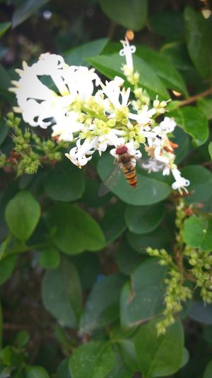 Insect Nature White Color Close-up No People Beauty In Nature Pollination Fragility Flower Head Privot Green Color