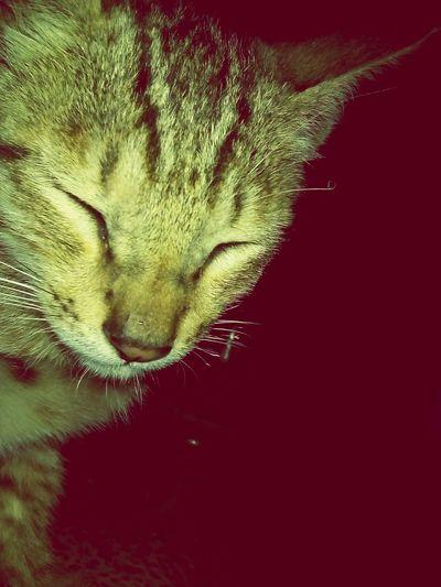 Cat Lovers Pets Of Eyeem