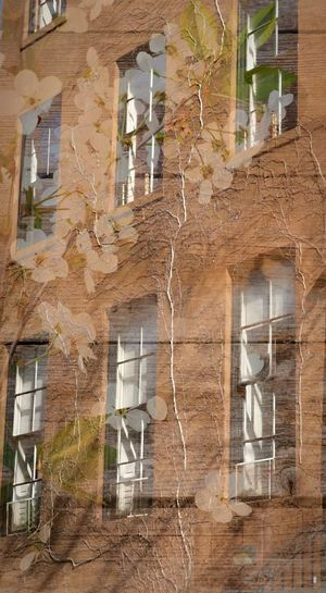 Built Structure Architecture Building Exterior Window No People Architecture Building Photography Vines Around Window Vines On Building BlendPic