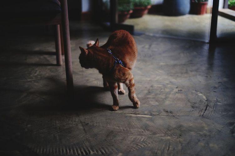 One Animal Domestic Animals Animal Themes Animal Pets No People Mammal