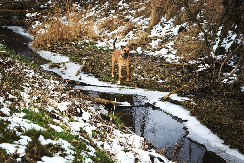 Nature Water Outdoors Beauty In Nature Animal Themes At The River Outdoors Water_collection Frozen Dog Of The Day Dogs Of EyeEm Dogwalk Dogslife January 2017 How's The Weather Today? Winter 2017 Dog Domestic Animals One Animal Wartberg Scenics Cold Temperature Beauty In Nature