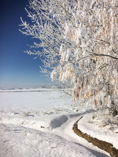Winter scenery in Colorado, USA. Blue Sky Clear Day Clear Sky Landscapes Longmont, Colorado No People Outdoors Snow Tranquil Scene Tree United States Winter Winter Landscape Winter Wonderland Shades Of Winter