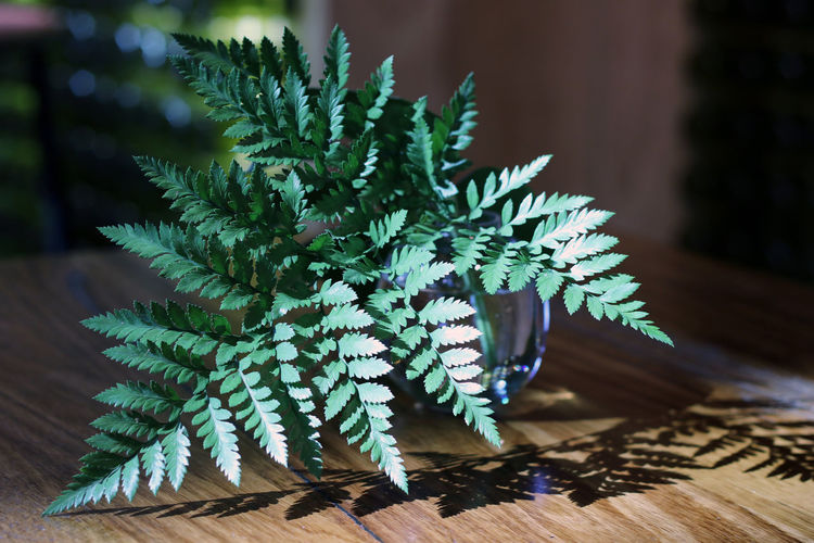 Fern Australia Cafe Close-up Decor Delicate Fern Focus On Foreground Freshness Green Green Color Growth Indoors  Leaf Nature No People Plant Restaurant Shadow Shadows & Lights Table Table Decoration Vase Wood - Material Yingyang