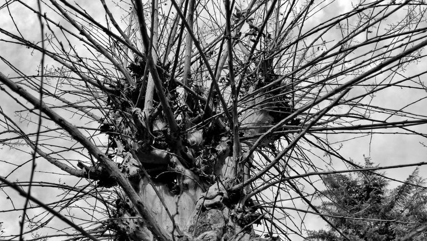 Growth Nature Low Angle View Tree Day Branch No People Outdoors Plant Beauty In Nature Bare Tree