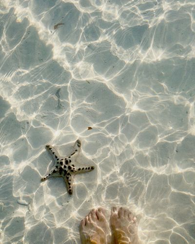 Low section of woman standing by starfish in sea