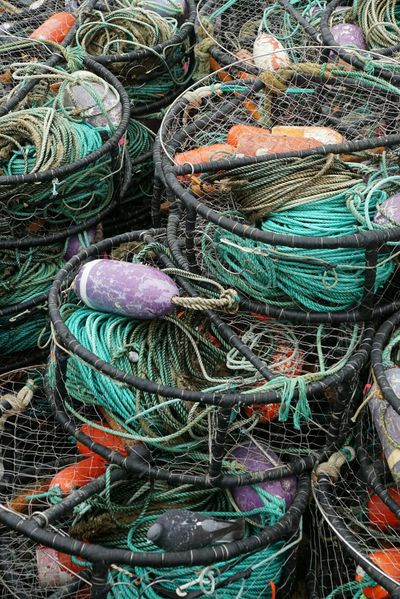 Morro Bay Southern California Harbor Bay Crabbing Crab Color Explosion Colorful