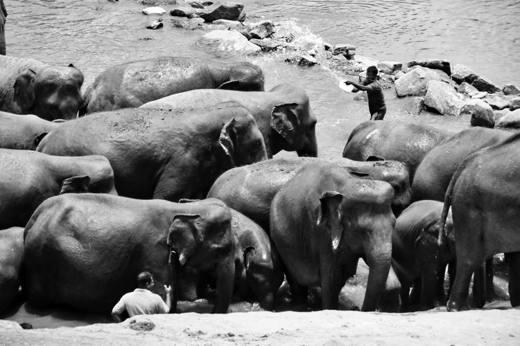 Elephants amidst rocks in river