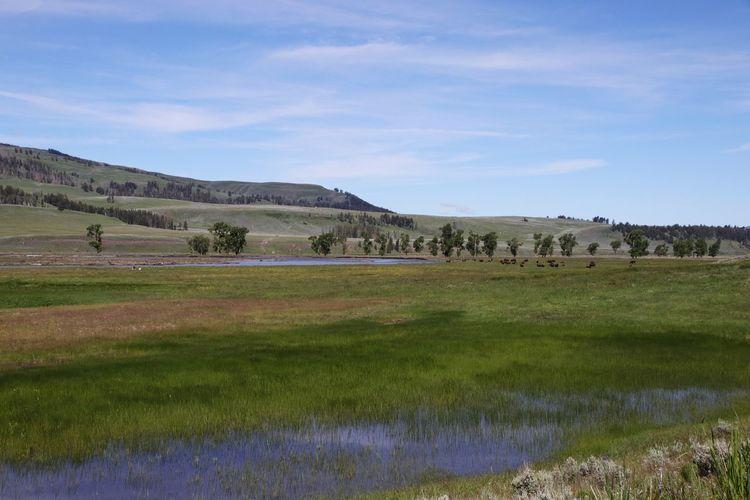 Lamar Valley,