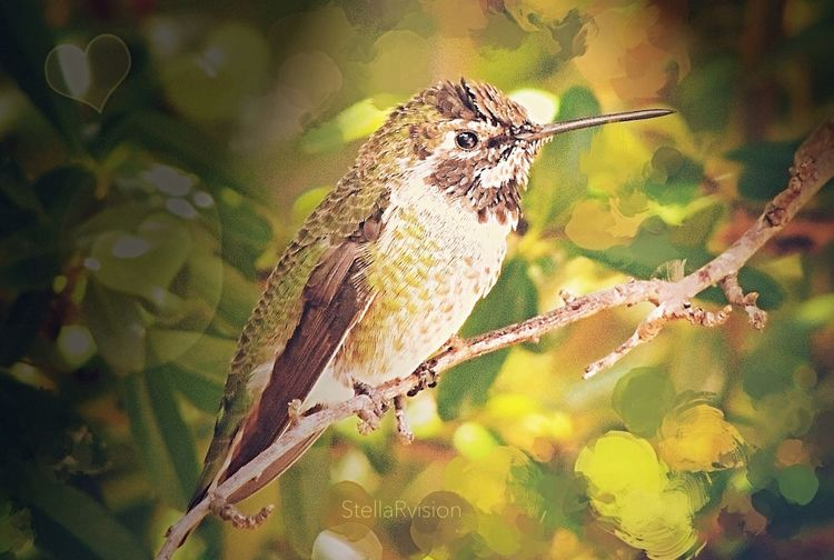 You're so vain! I'll bet you think this song is about you! The Hummingbird Series Backyard Birder NEM Painterly Colors Of Autumn