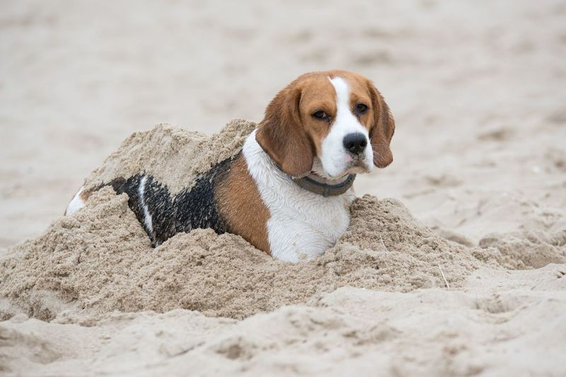 Portrait of dog on sand at beach