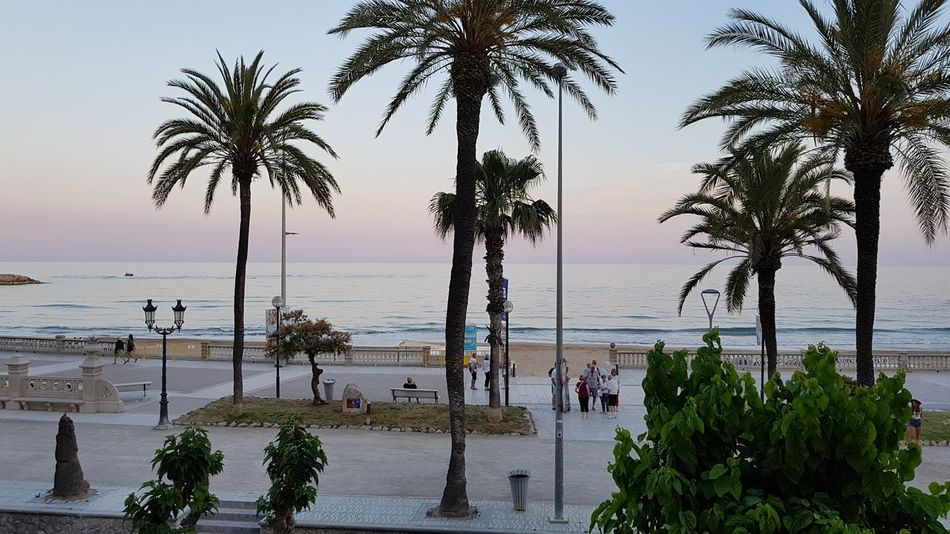Palm Tree Tree Beach Sea Water Silhouette Vacations Outdoors Travel Destinations Nature Swimming Beauty In Nature Horizon Over Water People Adult Sky Landscape Scenics Full Length Day Sitges Beach Sitges Barcelona España Spain♥ Sitges Blue
