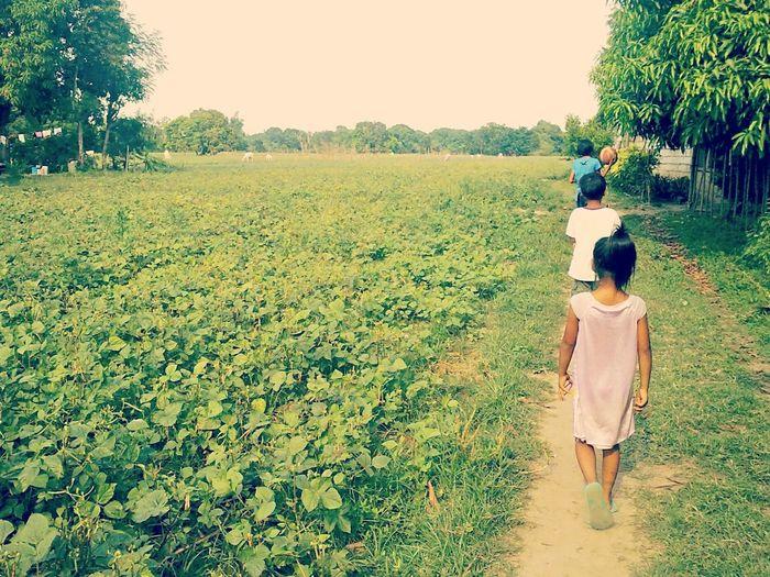 The Road Way Home. Field Green Plants Malasiqui Pangasinan