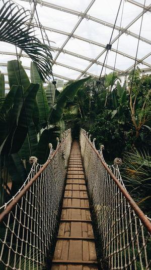 Nature Greenhouse Plant Nursery Indoors  No People Growth Day Travel Destinations Zoo Animal Zoopark Zoo Berlin Zoo Leipzig Jungles Junglesafari Bridge Photography Bridge