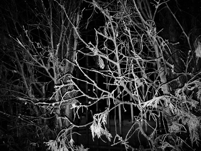 Tree No People Nature Beauty In Nature Dark And Dismal Black And White Nature Photographs Beauty Nature On Black And White Beauty Places Naturaleza En Blanco Y Negro Blackandwhite Photography Branch Outdoors Day Close-up