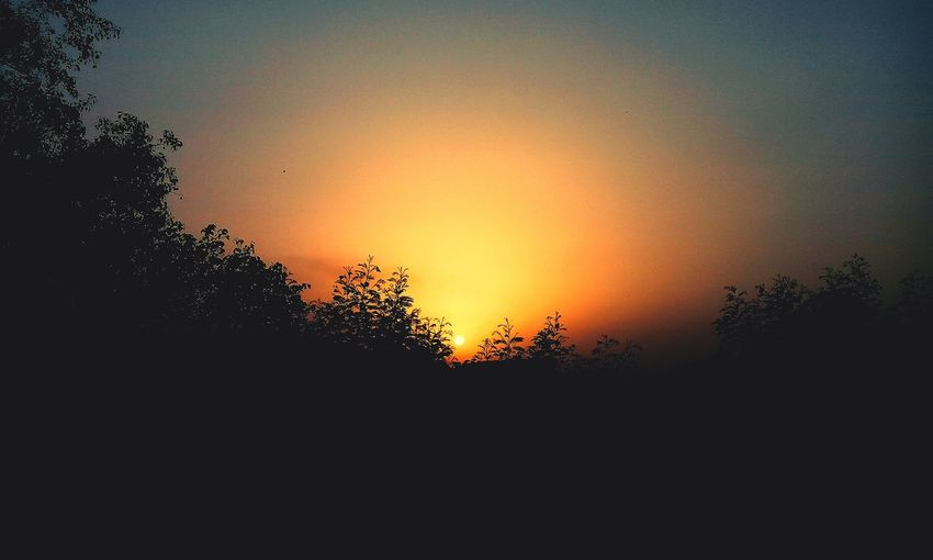 Tree Silhouette Sunset Nature Sky No People Beauty In Nature Low Angle View Outdoors Scenics Day