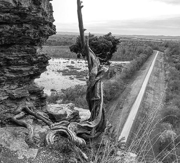 High Drop Road Roadside Rocky Highway Highway3 Fall Mississippiriver Southillinois Southernillinois Southwesternillinois Southernillinoisphotography Southernillinoisphotographer Rupinehills Statepark StateParks Statehighway Blackandwhite Tree Trees Rock Swamp Shawneenationalforest Nationalwildliferefuge nationalforrest sundayfunday funday
