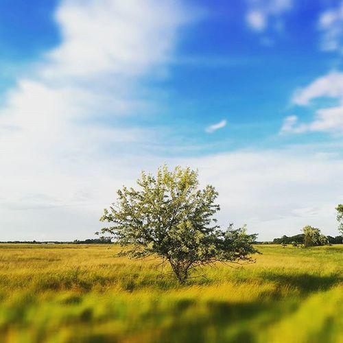 🌳Lonelytree with HuaweiP9 P9 Huaweimobilehungary Huaweimobile Lásdmáskéntavilágot ChangeTheWayYouSeeTheWorld Oo @huaweimobile Leica Instacool Urban City Hajduszoboszlo Hungary Mindekozben Mik Ikozosseg Mobilephotography Mindekozben Nature Natureporn @huaweimobilehungary Tree Baum Hatar Fa