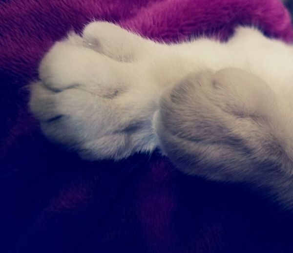 Cats Of EyeEm Cats Paws Macro Softness Fur Paw White White Cats Paw Trusting Abstract Still Life Photography Meditation Cozy And Warm Pet Cat Lover Relaxing Moments Enjoying The Moment Check This Out Animal Leg Domestic Animals Soft Paws Cat Lap Cat Catnap My Year My View