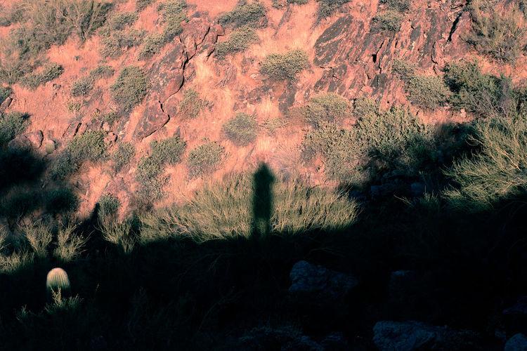 Shadow of tree on mountain