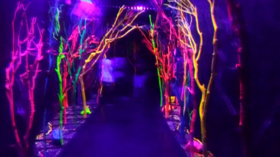 Illuminated Motion Multi Colored Purple Indoors  Art Abstract Tumblr Grunge GrungeStyle Vibrant Color Arts Culture And Entertainment Museum Artgallery MeowWolf Modern Indoors  Forestry Forest Night Tree Neon Neon Tree Neon Trees