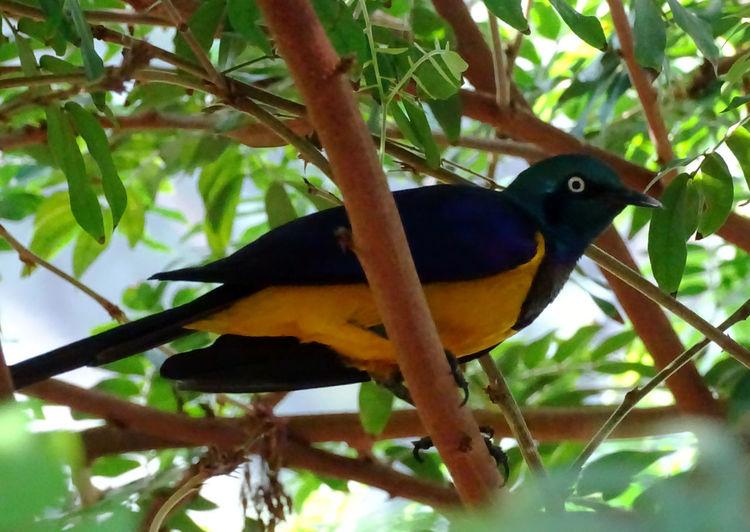 Bird Photography Birds Of EyeEm  Animal Themes Bird Perching Tree Branch Close-up Tropical Bird