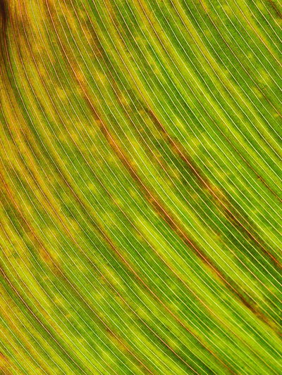 Jeans Brown Photography - Jeans Brown Photography Nature Nature Photography Abstract Abstract Backgrounds Backgrounds Beauty In Nature Brightly Lit Close Up Close-up Closeup Creativity Freshness Full Frame Green Color Leaf Motion Multi Colored Natural Pattern Nature Nature_collection No People Palm Leaf Pattern Plant Plant Part Striped Textured  Textured Effect