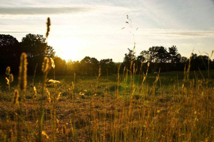 Have a lovely day!! Sunrise ABeautifulMorning ATouristInMyOwnCity TheSidewalksOfTheCity ScenesFromTheStreet EyeEm Best Shots