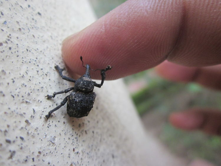 Insect Human Finger Real People Beetel Highfive Friends ❤ EyeEmNewHere