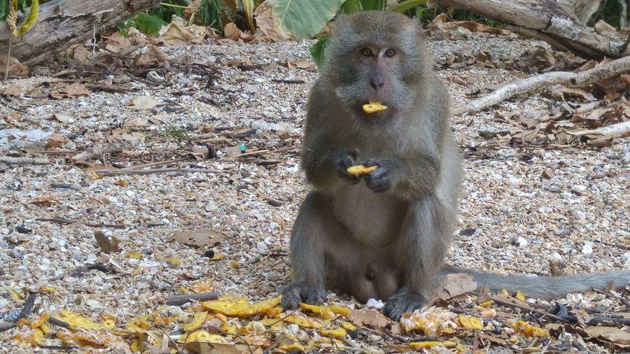 Monkey eating on dirt