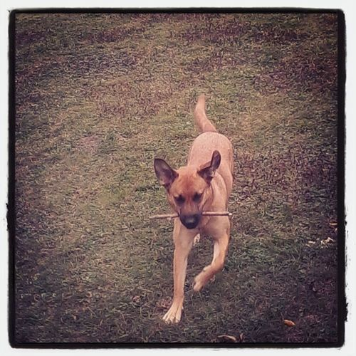 Masza Dog MyloveEnjoying Life First Eyeem Photo